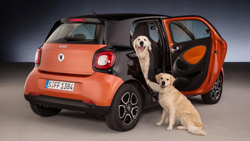Soluciones para viajar seguro en el coche con tu perro