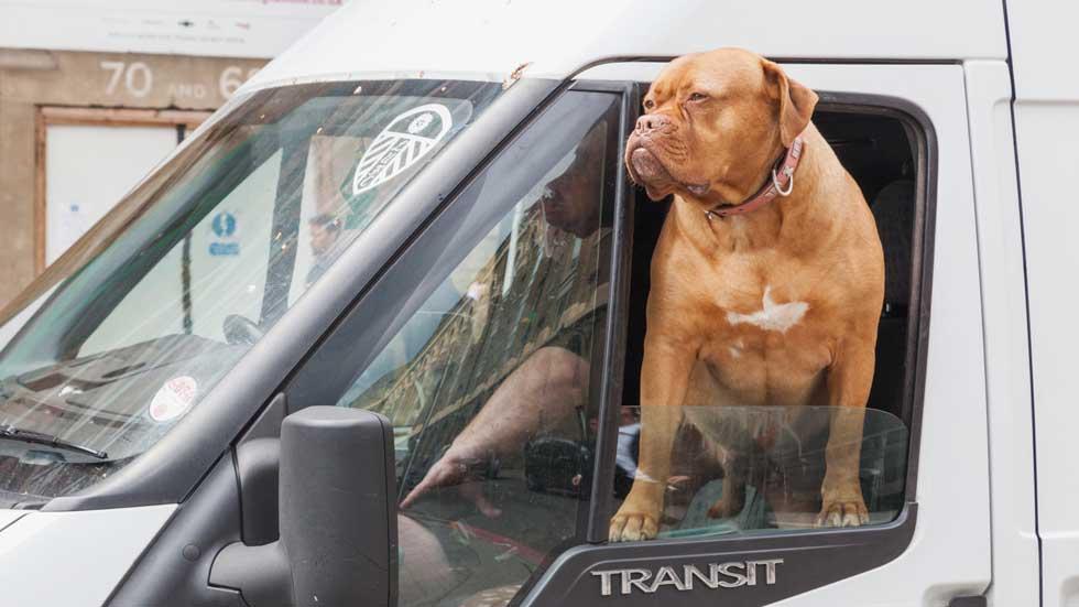A 230 km/h y con el perro en su regazo