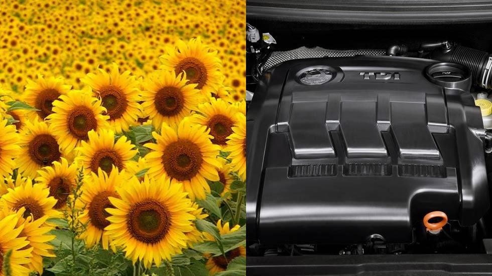 Dudas: ¿puedo echar aceite de girasol a un motor Diesel?