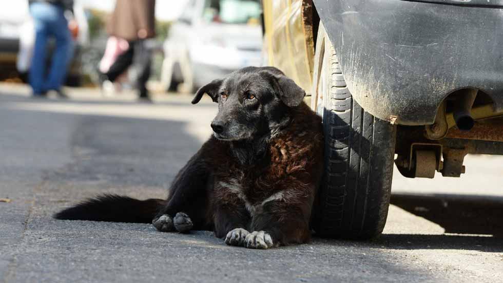 ¿Por qué los perros orinan en las ruedas de los coches?