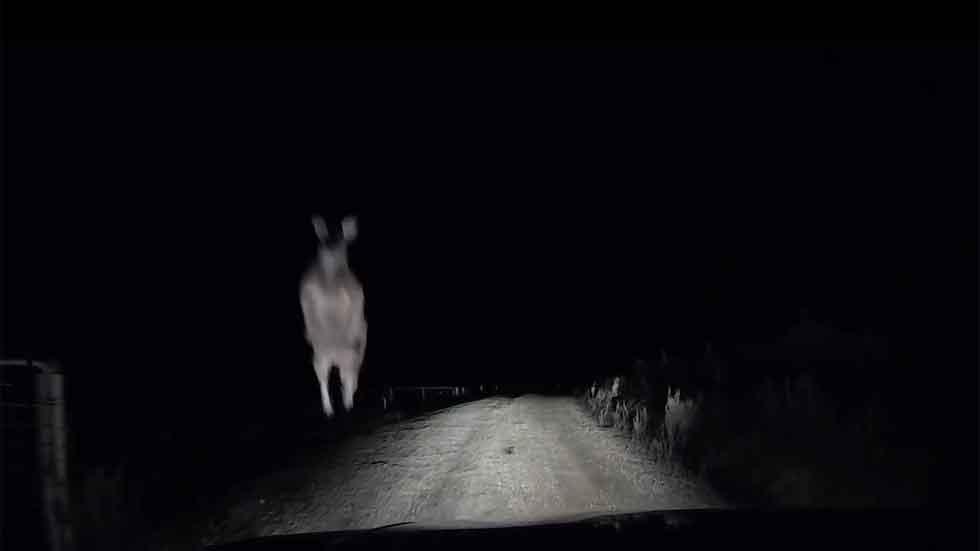 Un canguro salta a su coche y le rompe la luna (video)