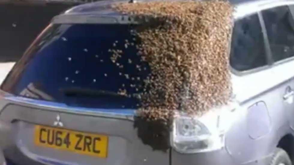 Unas abejas hacen de un coche su colmena (vídeo)