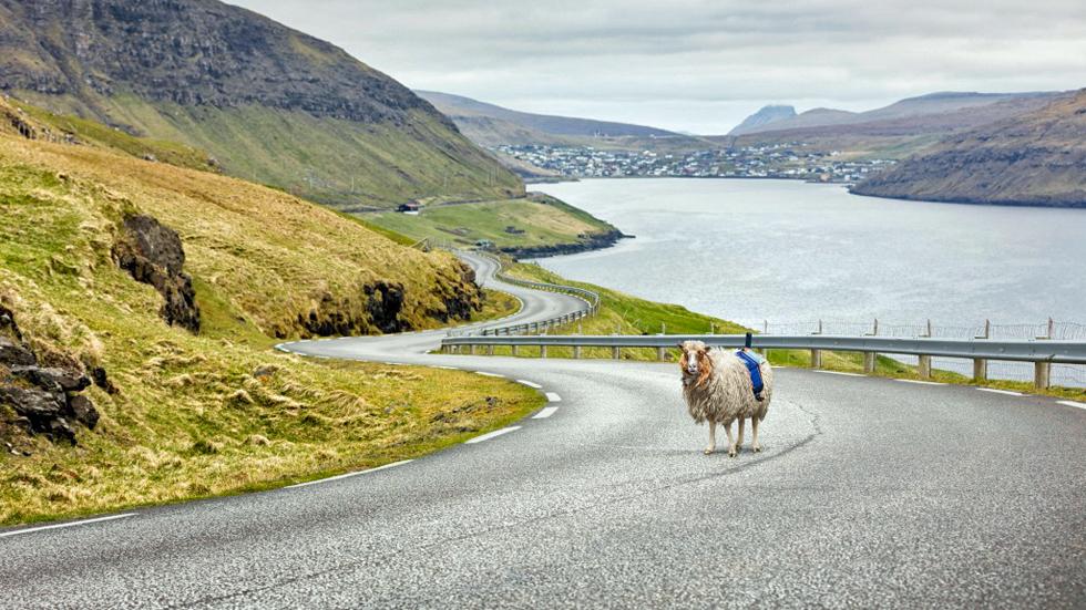 """Las ovejas, las nuevas """"trabajadoras"""" de Google Maps"""