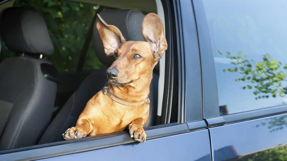 Un perro… ¡cazado por un radar al superar la velocidad máxima!