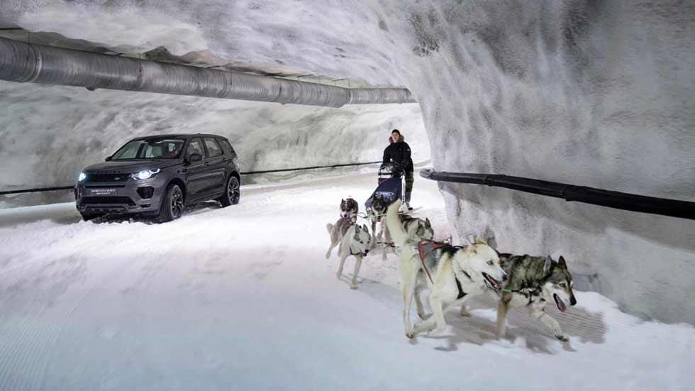 Land Rover Discovery Sport vs perros de la nieve