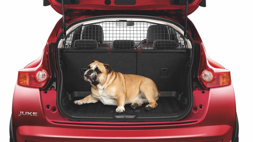 Cómo viajar seguros en coche con mascotas (trucos y vídeo)