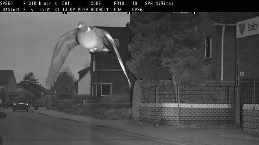 La sorprendente multa (y no a un coche) de un radar de velocidad a 45 km/h en límite de 30