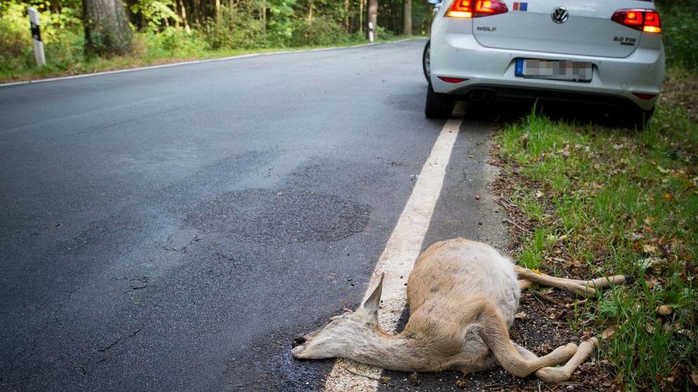 Cómo prevenir accidentes con animales sueltos en carretera: ¿lo cubre además el seguro?