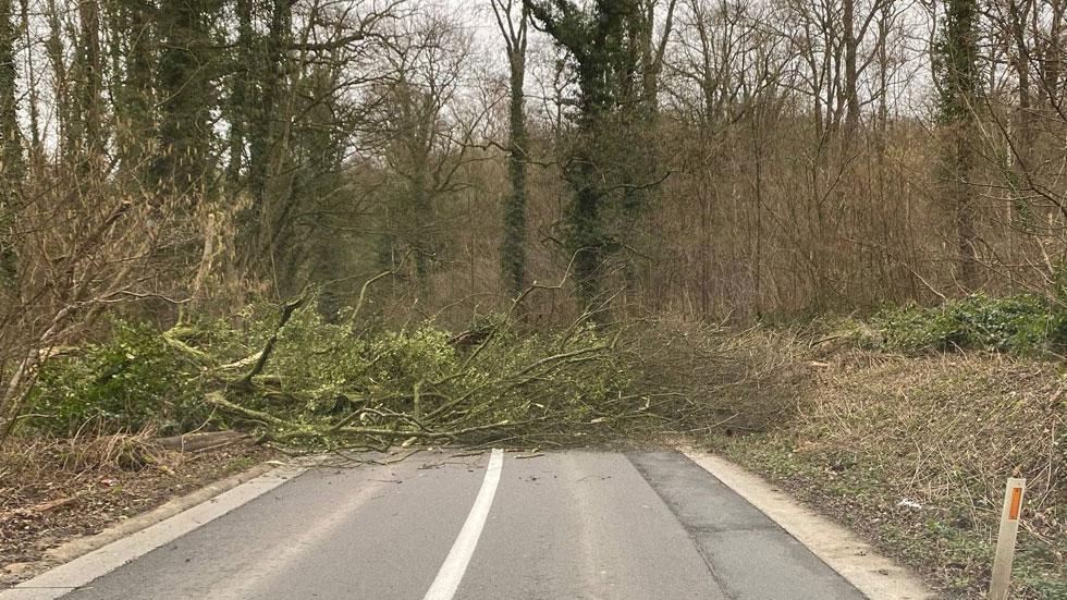 Así salva la frenada de emergencia de un Tesla a una familia de chocar contra un árbol caído