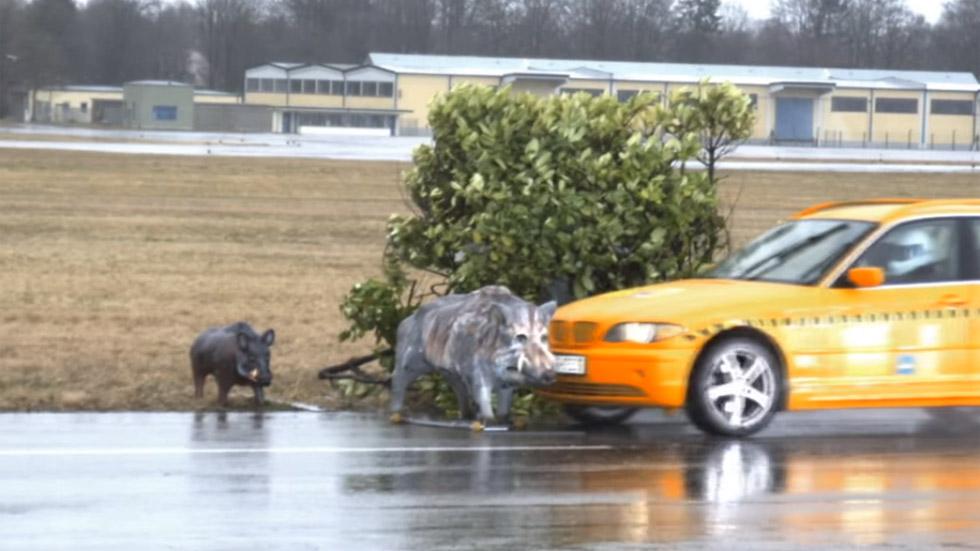 Qué ocurre si chocas en coche contra un animal a 80 km/h: atento al vídeo