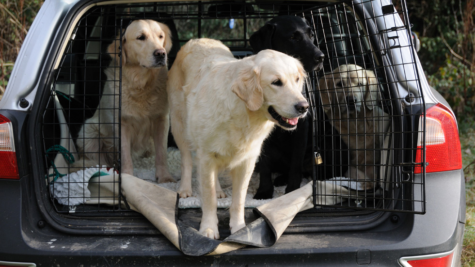 Cómo viajar seguro en coche con tu perro o mascota