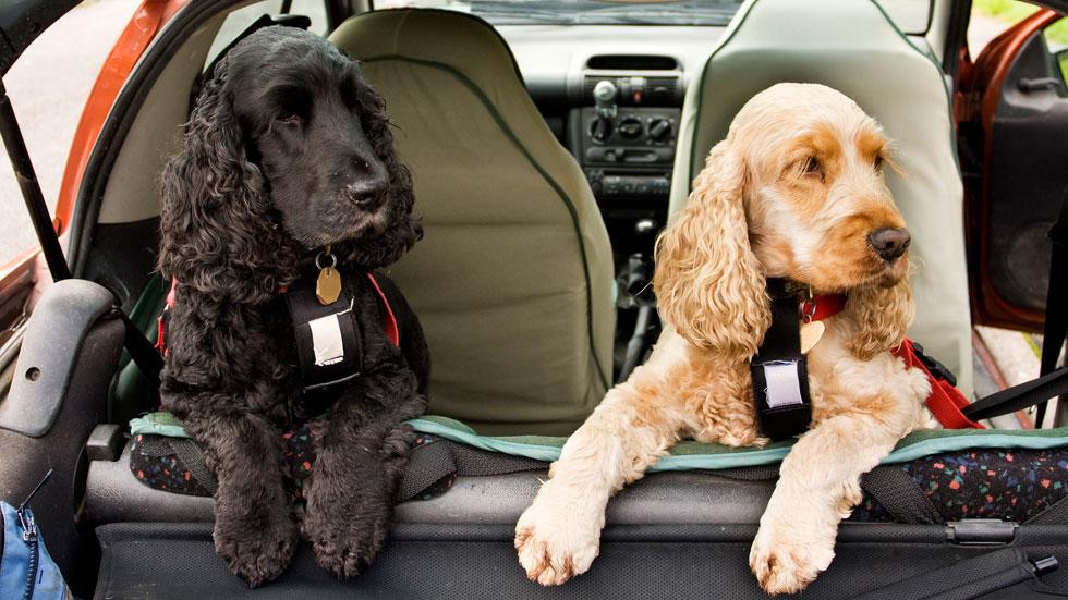 Subaru quiere que nuestras mascotas vayan más seguras