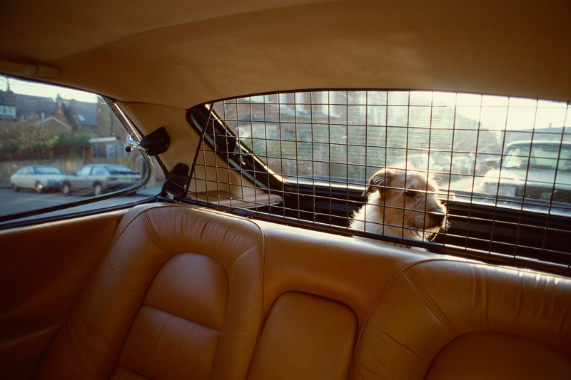 Cómo viajar seguro con tu perro o mascota
