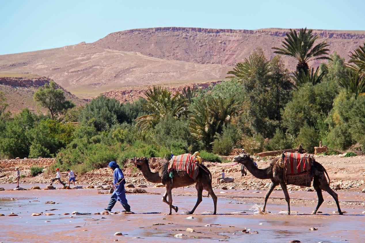 El Desierto de los Niños 2015