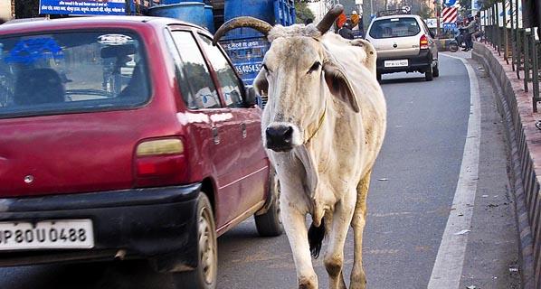 La India, líder de muertes en carretera