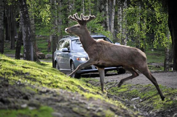 Volvo y sus nuevos sistemas de seguridad